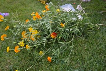 Na  Matki Bożej zielnej - kwiatowe bukiety