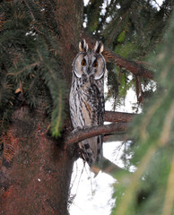 The big owl is sitting on a branch