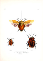 Illustration of insects