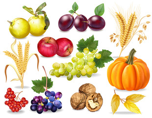 Autumn set Vector realistic. Pumpkin, wheat, grapes, wine, walnuts, grapes. Detailed 3d design. dark backgrounds