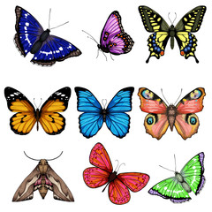 vector illustration with big collection of butterflies on white background
