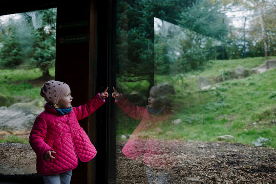 Little girl looking through the window and pointing an animal in a zoological park
