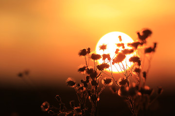 dry flowers on sunset background