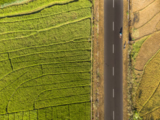 Aerial top view of green rice field cross by road