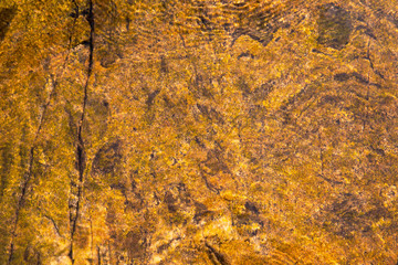 Background. Yellow. Brown. Vintage. Old. Yellowed. Sea bottom. Seaweed. Stone bottom