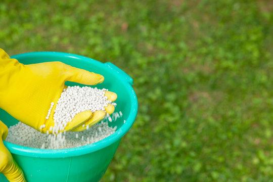 Fertilizing plants, lawns, trees and flowers. Gardener in gloves holds white fertilizer balls on grass
