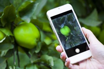 smartphone shooting apple garden