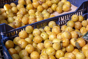 Yellow plums at Vilafranca dP market