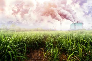 landscape sugar farm field with sugar factory