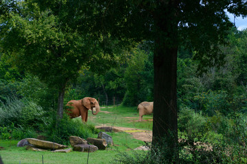 Big elephant on a green forest background