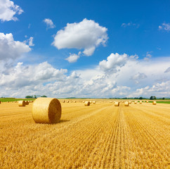 Garden Poster Culture Yellow golden straw bales of hay in the stubble field, agricultural field under a blue sky with clouds