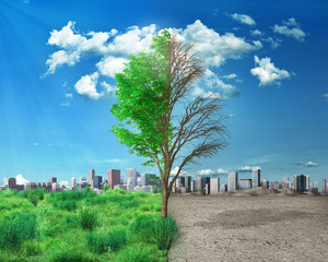 The concept of season changes. Half alive and half dead tree standing on city background. Save the environment.