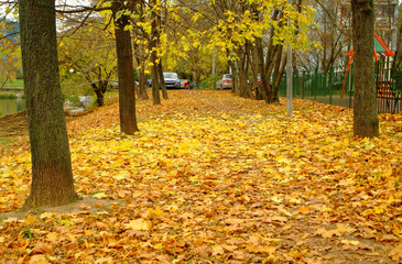 bright yellow foliage in autumn in the Park
