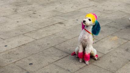 Farbiger Hund