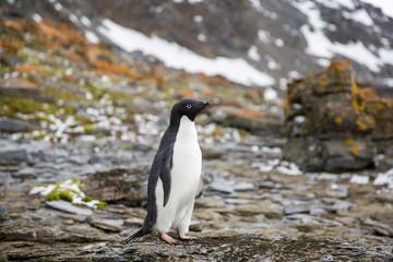 penguin in the arctic