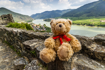 Teddy bear Dranik in Wachau valley.
