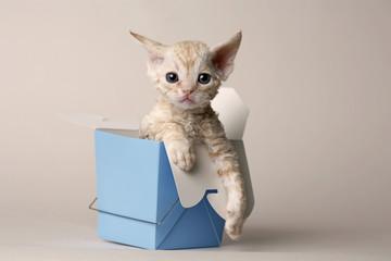 Take Out Box Kitty