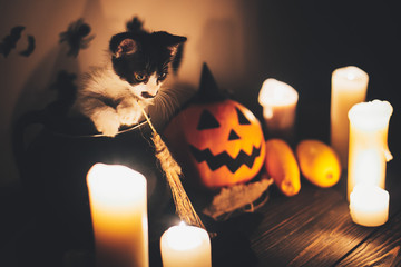 Happy Halloween. black kitty sitting in witch cauldron and Jack o lantern pumpkin with candles, broom and bats, ghosts on background in dark spooky room. atmospheric image