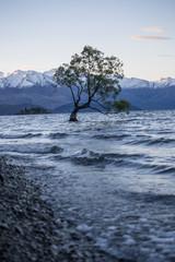 Wanaka tree New Zealand 1