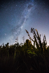 Milky Way with New Zealand bush in the foreground