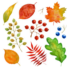 Set of watercolor  leaves and berries, paint texture, vector
