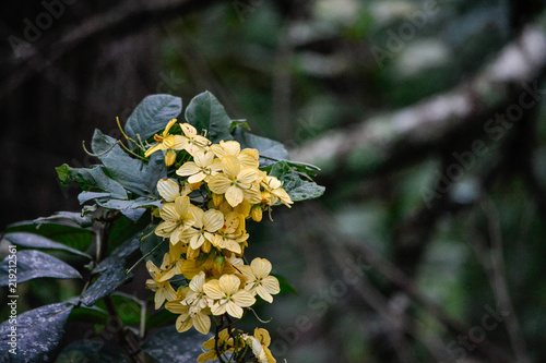 yellow swamp flowers