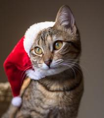 Mascota en navidad