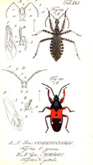Illustration of a beetle.