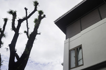 Tree beside residential home with cloudy sky