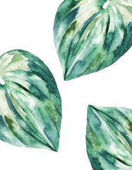 Tropical summer card. Abstract print. Watercolor leaf. Hand drawn illustration