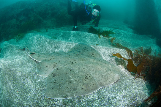 Diver with Angel Shark