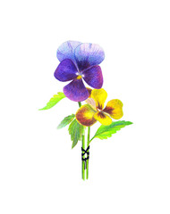 coloring pensil  Illustration of two flowers tied with a black ribbonon on white background
