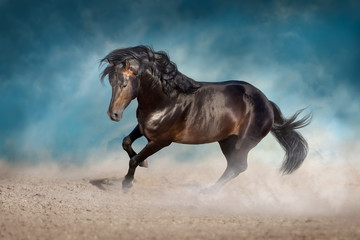 Wall Mural - Bay horse with long mane run fast in desert dust against blue background
