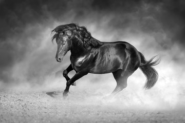 Wall Mural - Dark stallion free in motion. Black and white
