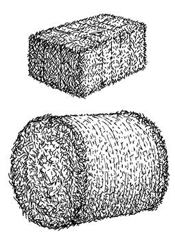 Hay, bale illustration, drawing, engraving, ink, line art, vector