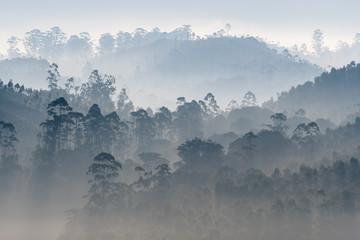 Aluminium Prints Blue sky Alive, Morning Mist over Western Ghats, India