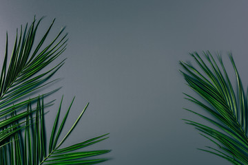 top view of green palm leaves arranged on grey backdrop