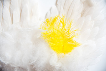 A group of white clean feathers. and one pen of a different color. The concept of individuality, leadership.