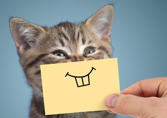 Papier Peint - happy crazy cat portrait with funny smile on blue background