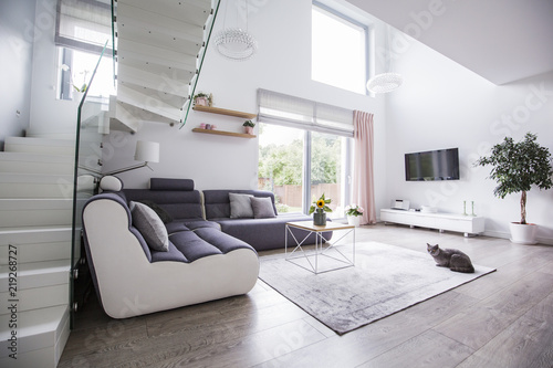 Cat In A Modern Living Room Interior With A Corner Sofa Stairs Tv