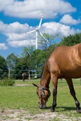 koń i wiatrak - fototapety na wymiar