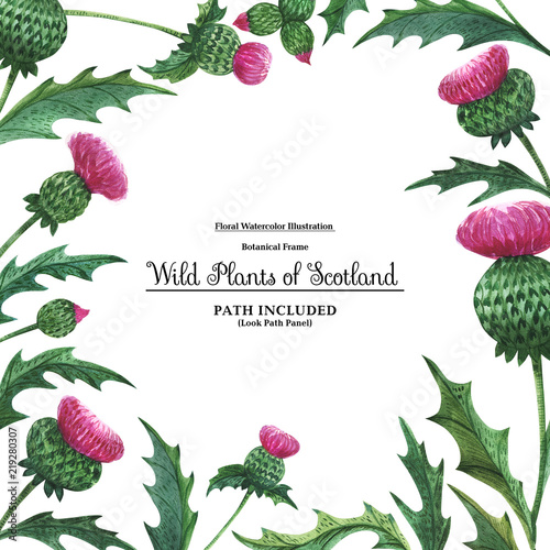 Square Border From Thistles Floral Symbol Of Scotland Stock Photo