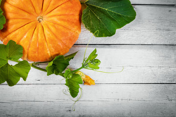 autumn harvest - pumpkin on white wooden background with copy space