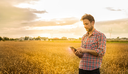 Farmer working on (using) tablet in front of wheat field