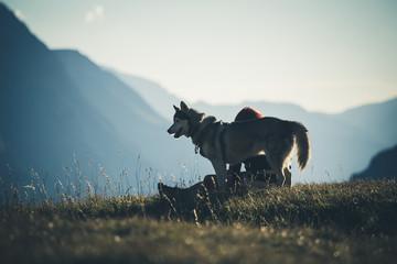 Husky et sa maîtresse