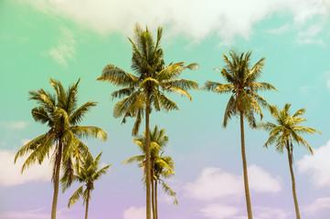 palmeras en un día soleado