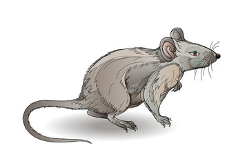 Fantasy illustration of little grey rat on white background. Hand-drawn vector image.