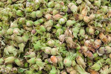 Young fresh hazelnuts ripe