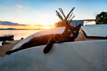 Stray black cat with the tongue out, in the lagoon enjoy the sunset