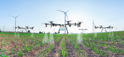 Agriculture drone fly to spray fertilizer on panorama sugarcane fields, Smart farm 4.0 concept